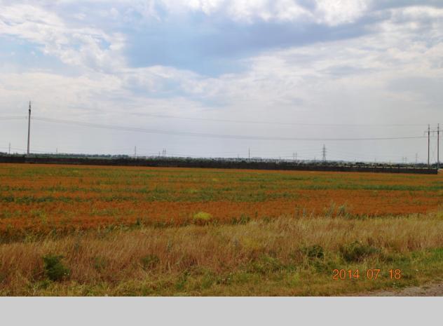 Sale of land plot in Odesa region - 7
