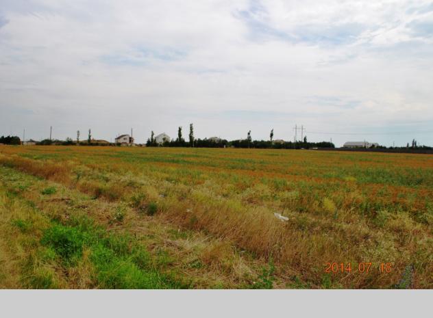 Sale of land plot in Odesa region - 5