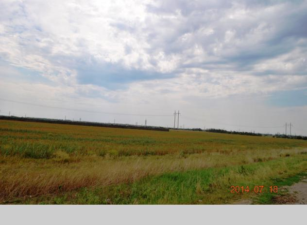 Sale of land plot in Odesa region - 6