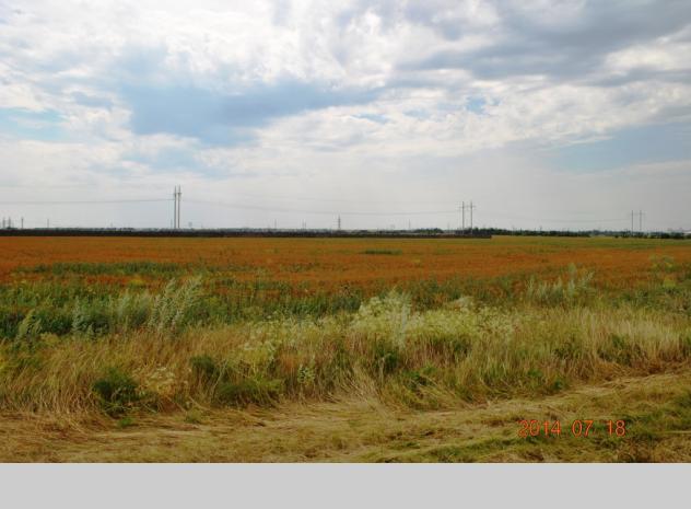 Sale of land plot in Odesa region - 2
